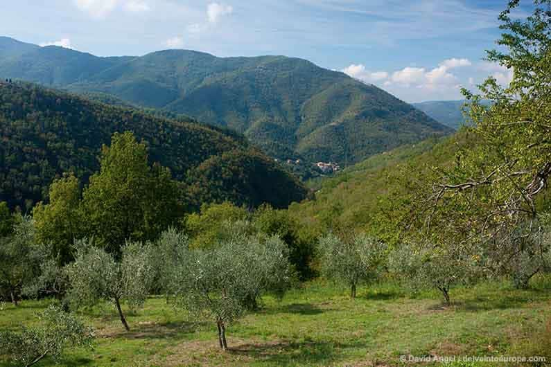 Best Places to Stay in Tuscany Image of olive grove in Mugello, eastern Tuscany