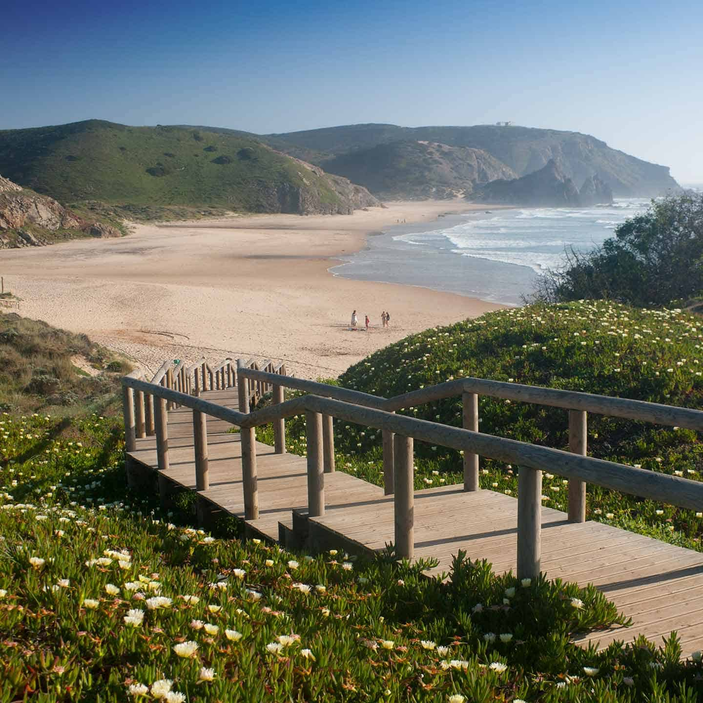 Best beaches in Algarve Image of Praia do Amado beach and spring wildflowers