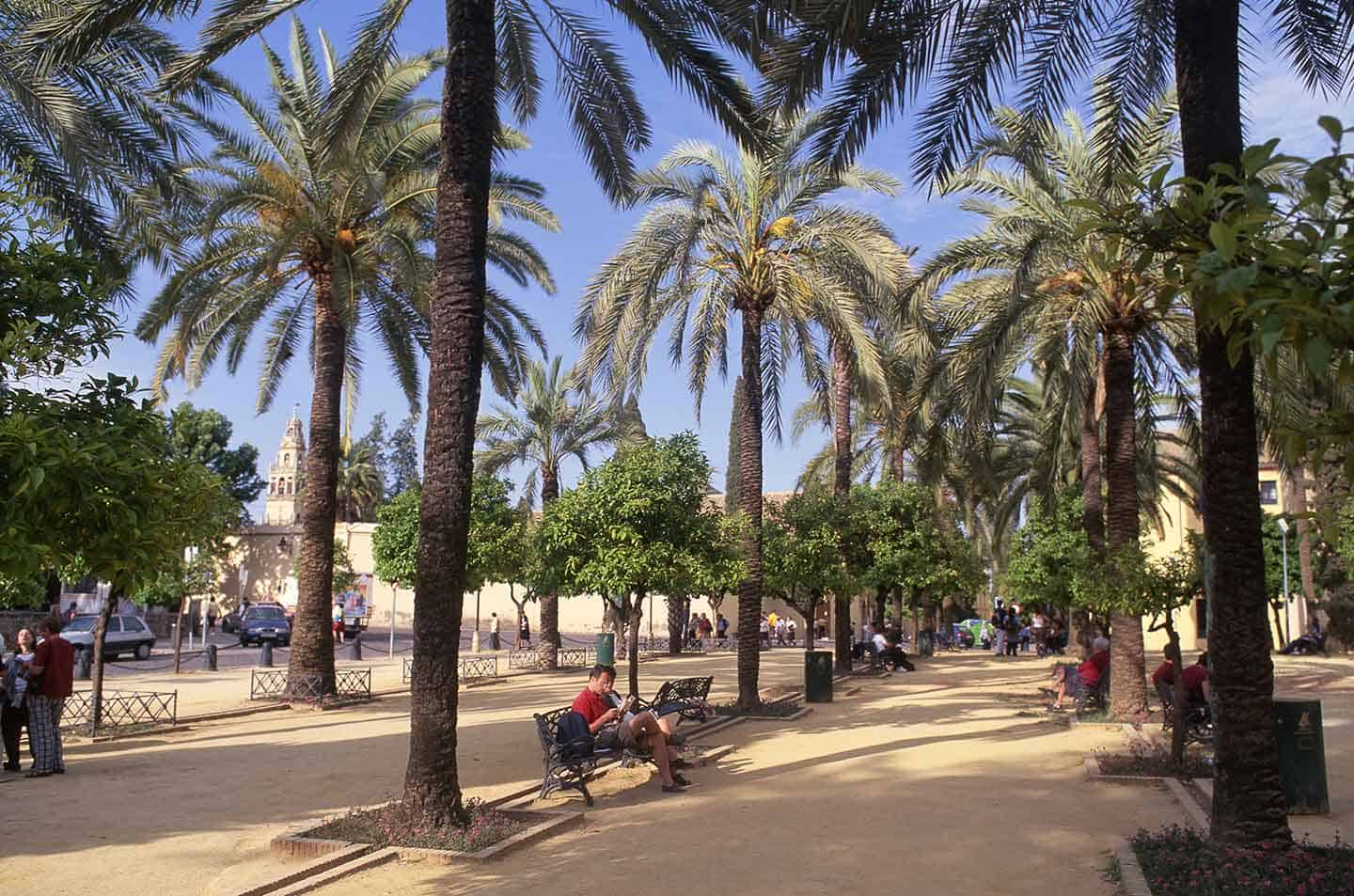 Image of park with palm trees outside Alcazar Cordoba Spain