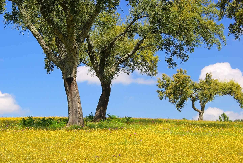 Image of cork trees in Alentejo region on road trip Portugal