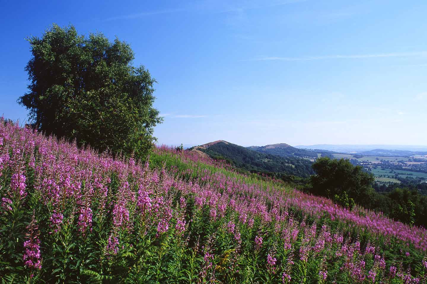 Image of the Malvern Hills in summer