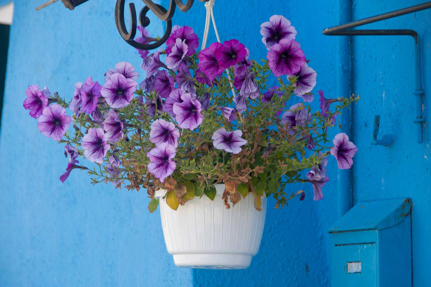 Image of a basket of flowers hanging outside a blue Burano house