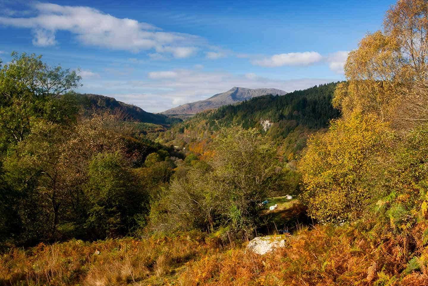 Image of the Lledr Valley in autumn, just south of Betws-y-Coed
