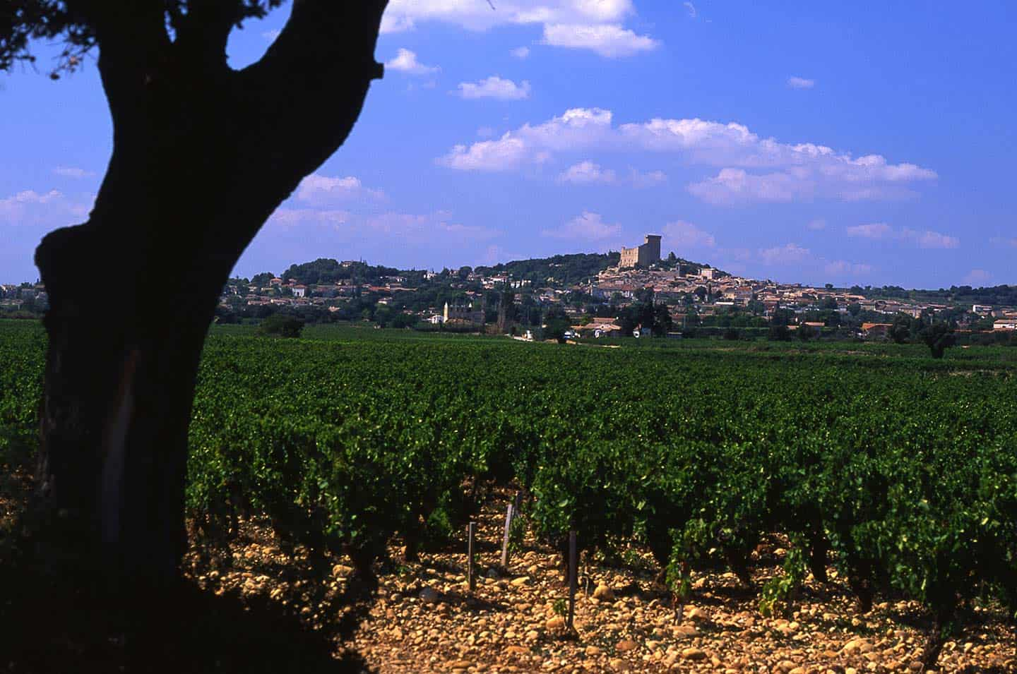 Image of vineyard at Chateauneuf-du-Pape