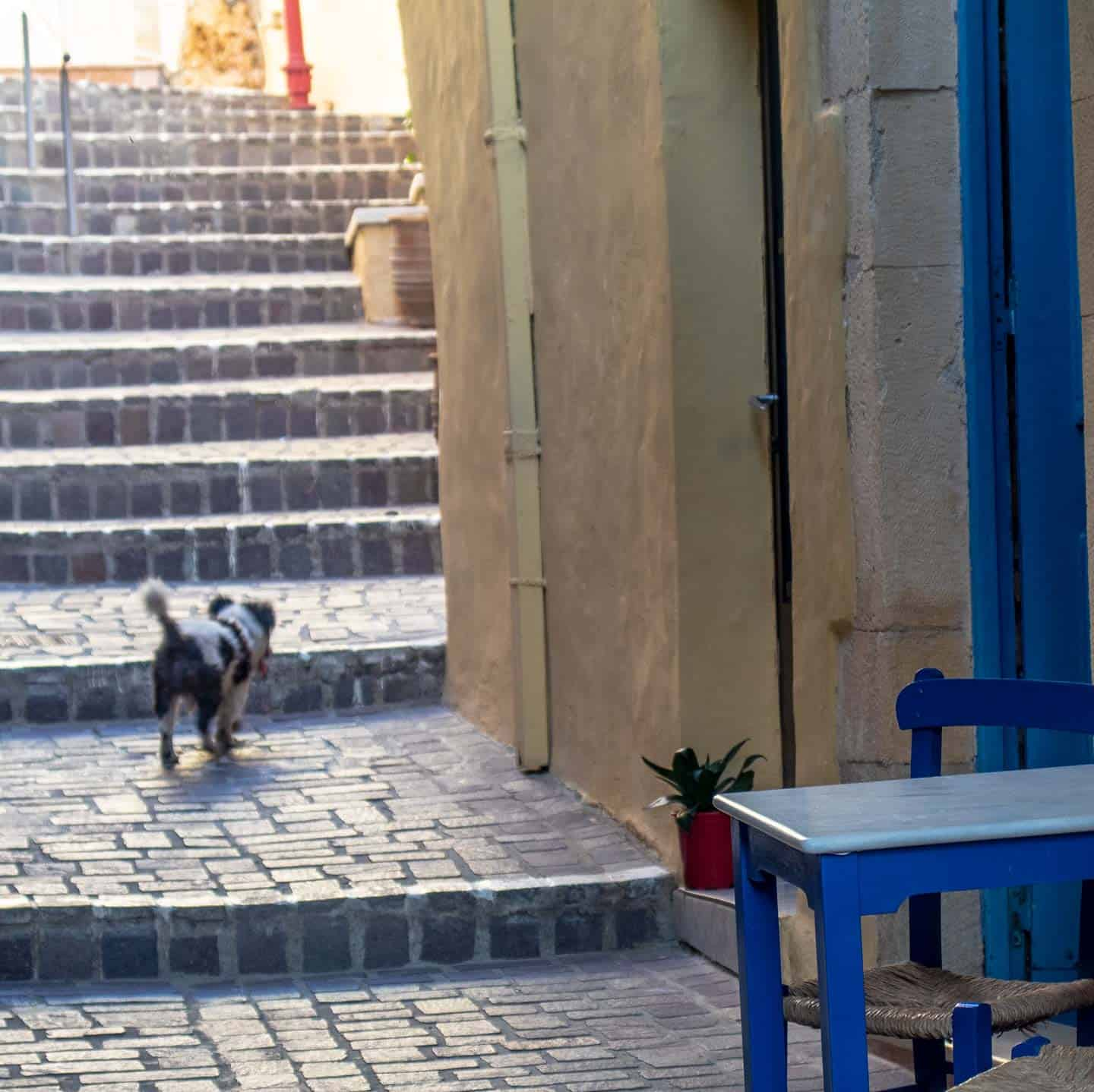 Image of a dog walking up a stepped street in Chania Greece