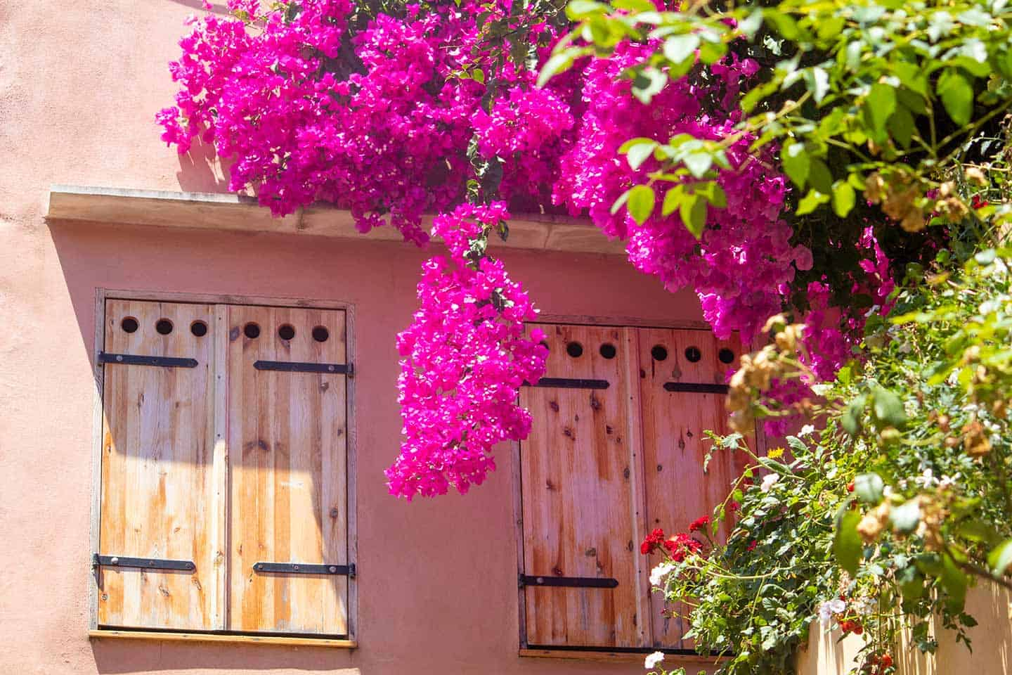 Image of a window surrounded by bougainvillea flowers Chania Crete Greece