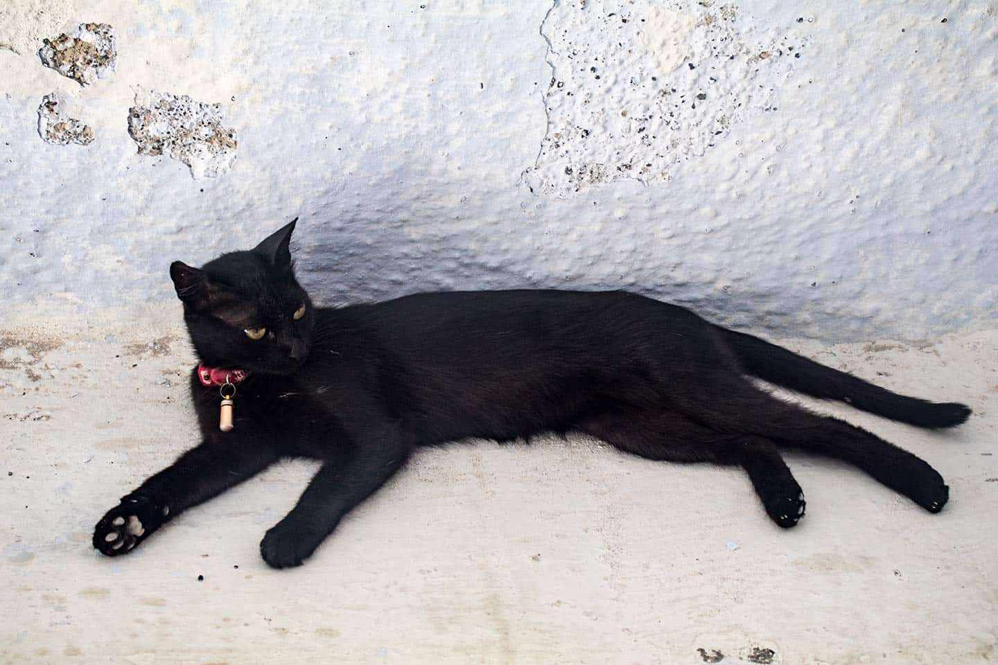 Image of a black cat resting in a village on Santorini