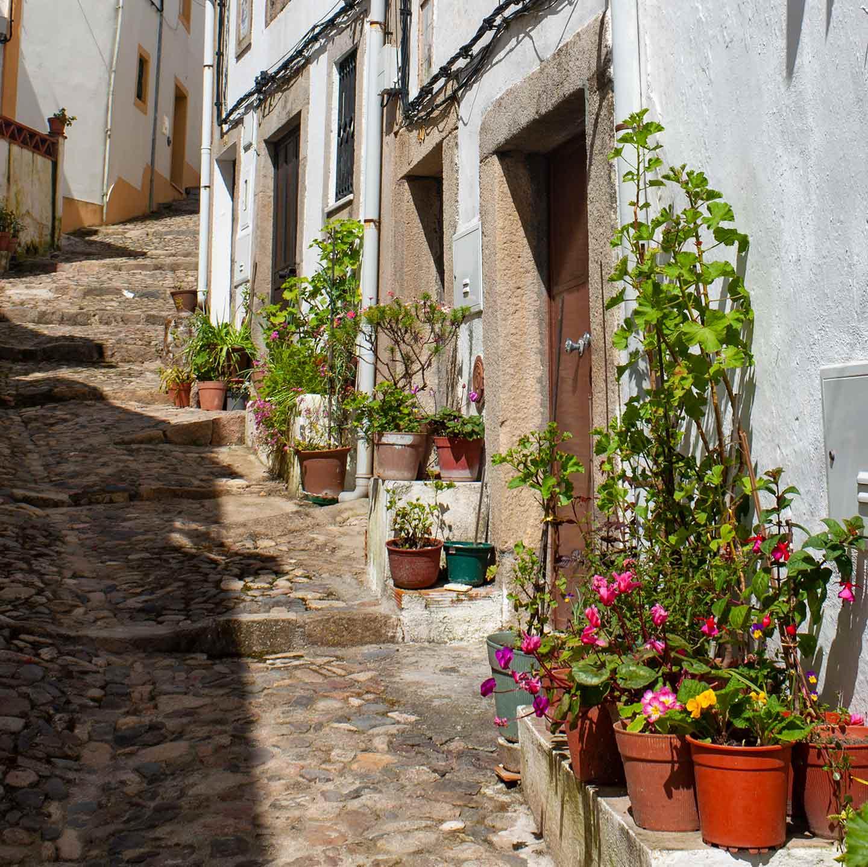 Image of a street with flowerpots in Castelo de Vide