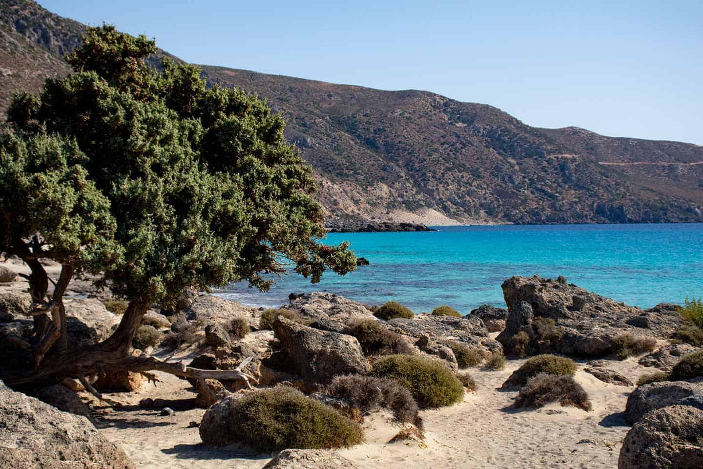 Image of a juniper tree and rocks at Kedrodasos beach Crete