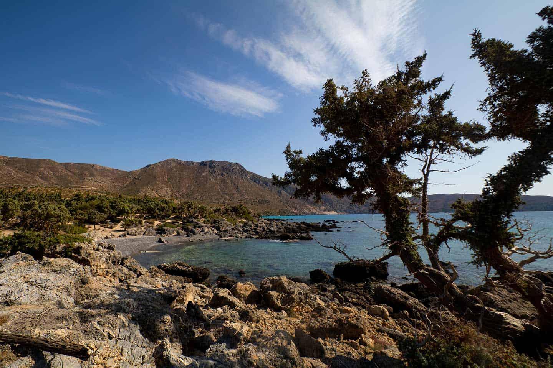 Image of a juniper tree at Kedrodasos beach in Crete
