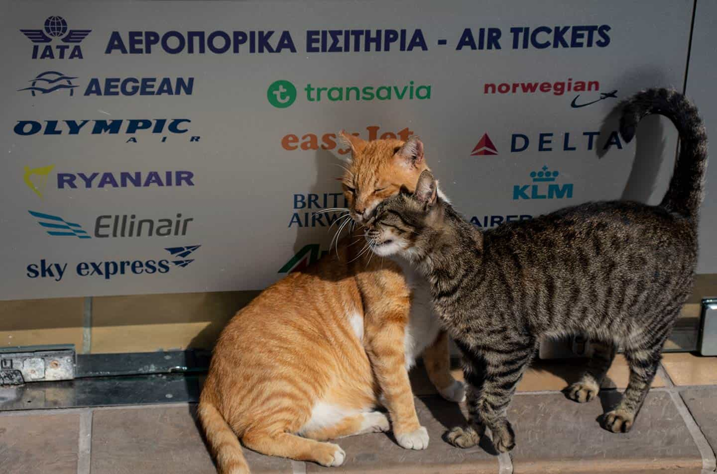 Image of two cats outside a travel agency door in in Paleochora Crete